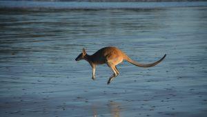australijscy brokerzy forex a interwencja asic